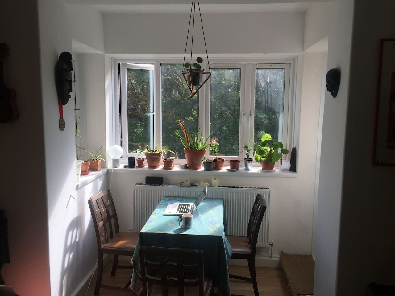 'bay' window with plants and morning sun