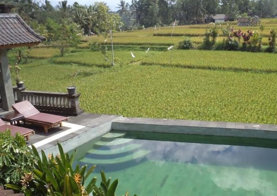 Pool Overlooking to the ricefield