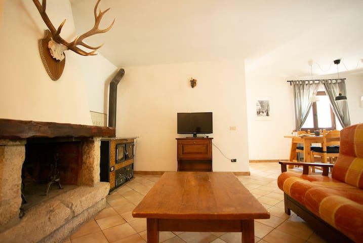 Le corna sono vere ma la testa è finta. Viviamo nel Parco Nazionale D'Abruzzo e siamo contro ogni tipo di caccia e violenza sugli animali. <3