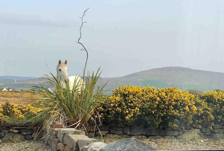Quiet, cosy, secluded cottage (Sleeps 5)