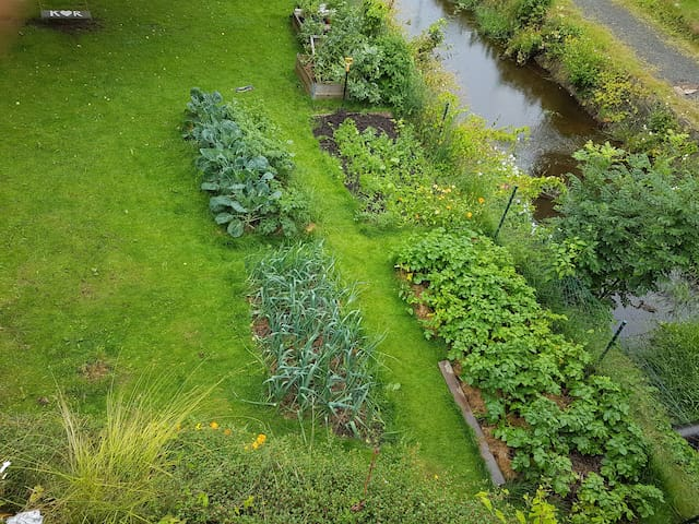 Garden with Greens.