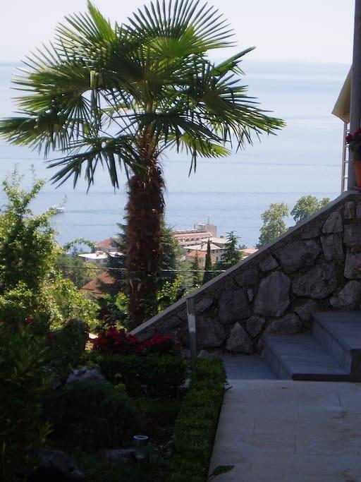 Palm and sea views