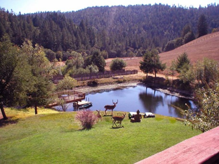 Our location is host to wildlife and breathtaking views!