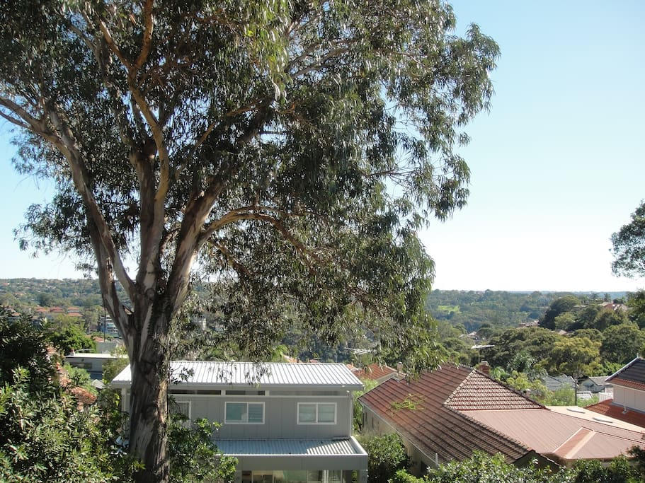 District views over large gum tree