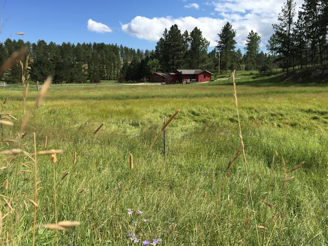 Plenty of room to roam. The grass is green all summer and then turns beautiful blazes in the fall.