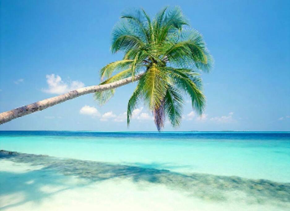 la plage de l'Anse Michel située à 800 métres du logement