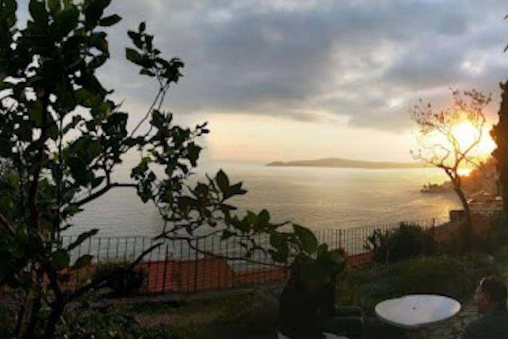 Petit jardin mediterranéen