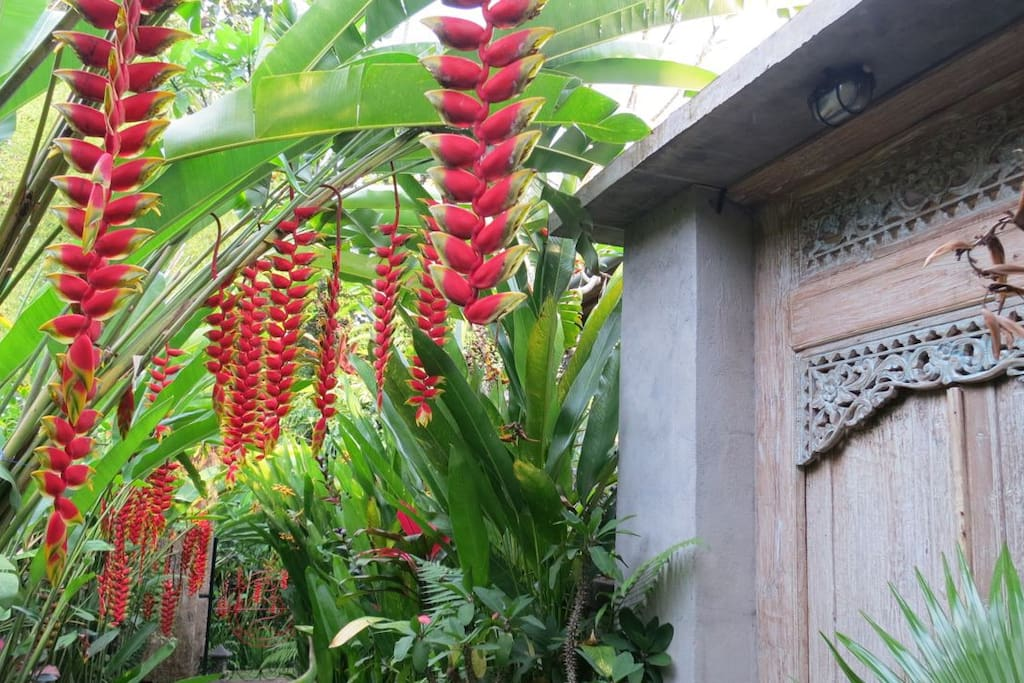Parrots beak heliconia line the path to the private entrance