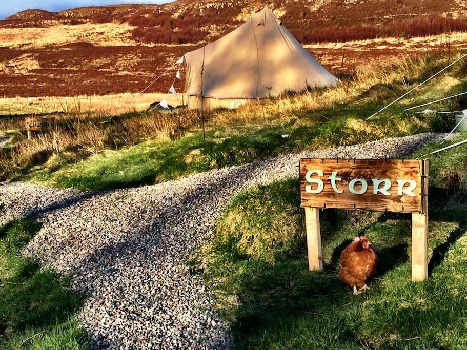 Storr Tent with a chicken :)