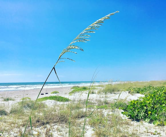 FIRST FLOOR! Ocean Beach Villas 103 OCEANFRONT