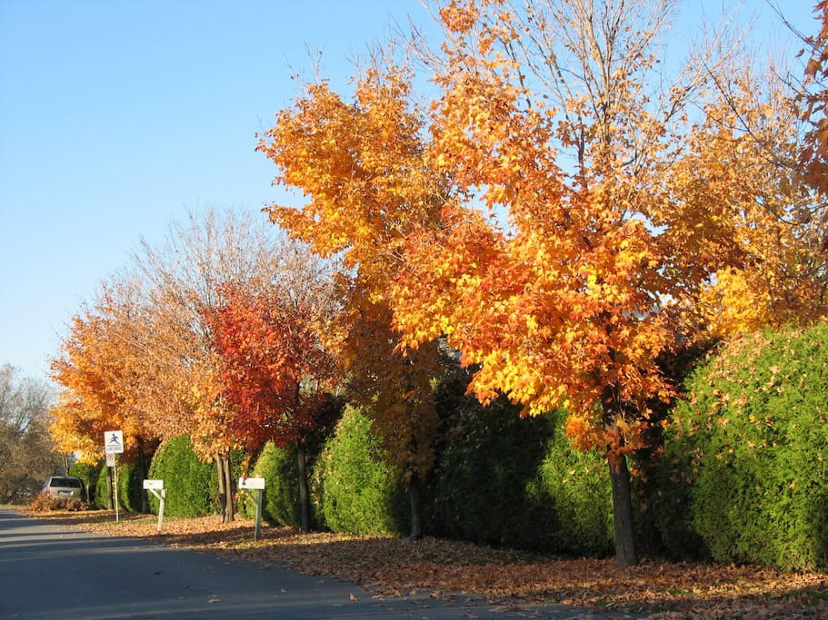 Sur notre rue en avant ... l'automne et ses couleurs magnifiques  C super nos 4 saisons au Québec !
