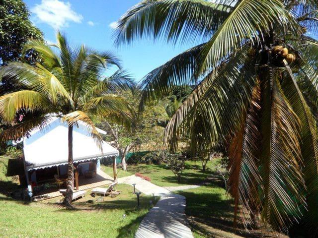 Bungalow cr ole dans un jardin tropical maisons louer for Jardin tropical guadeloupe