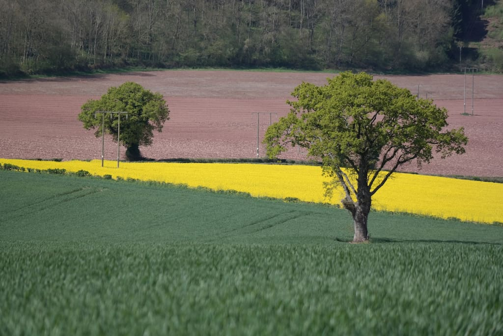 Spring fields: the view towards the west