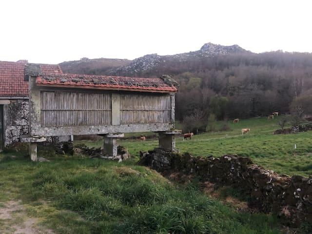 A Casa do Chico