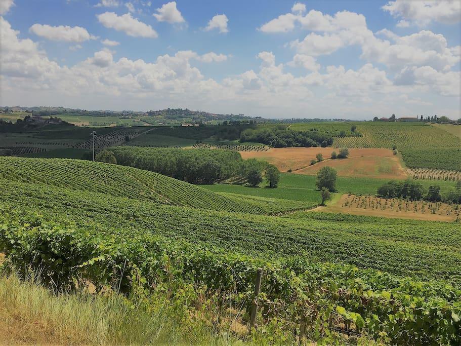 Vigneti ad Agliano // Agliano's Vineyards
