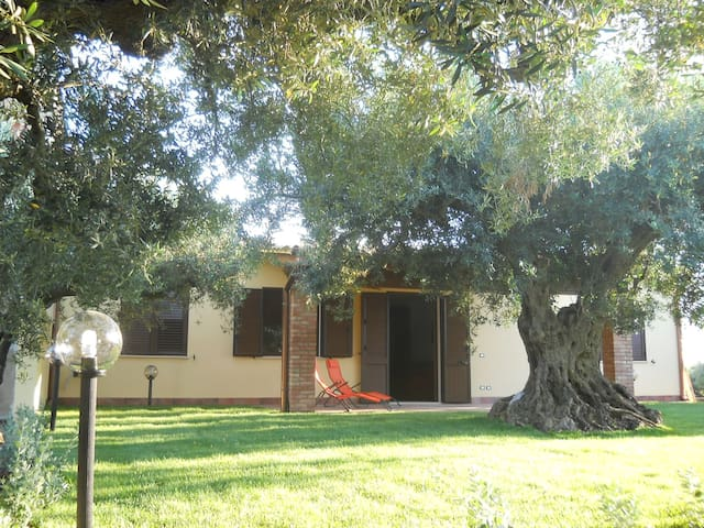 SCIACCA: Home among the olive trees - Sciacca - House