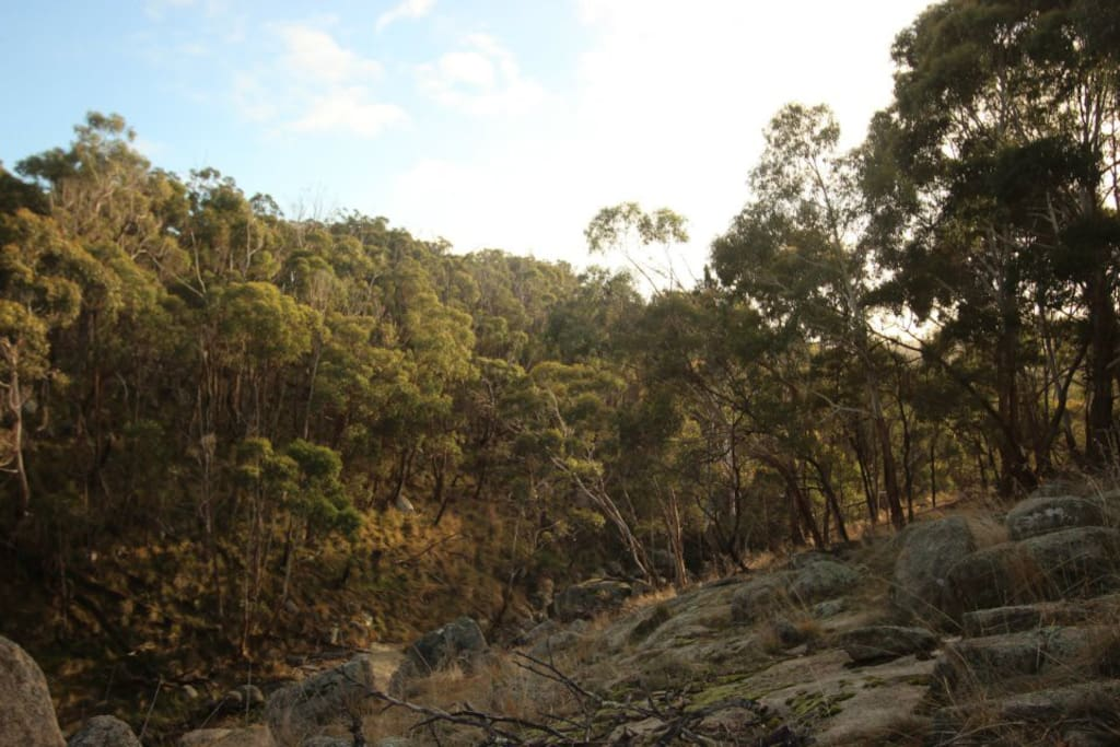 The boundary is a 40min through a km of parkland bush