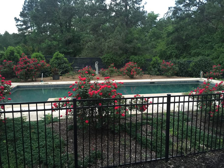 Forty foot long saltwater pool enclosed within rose garden