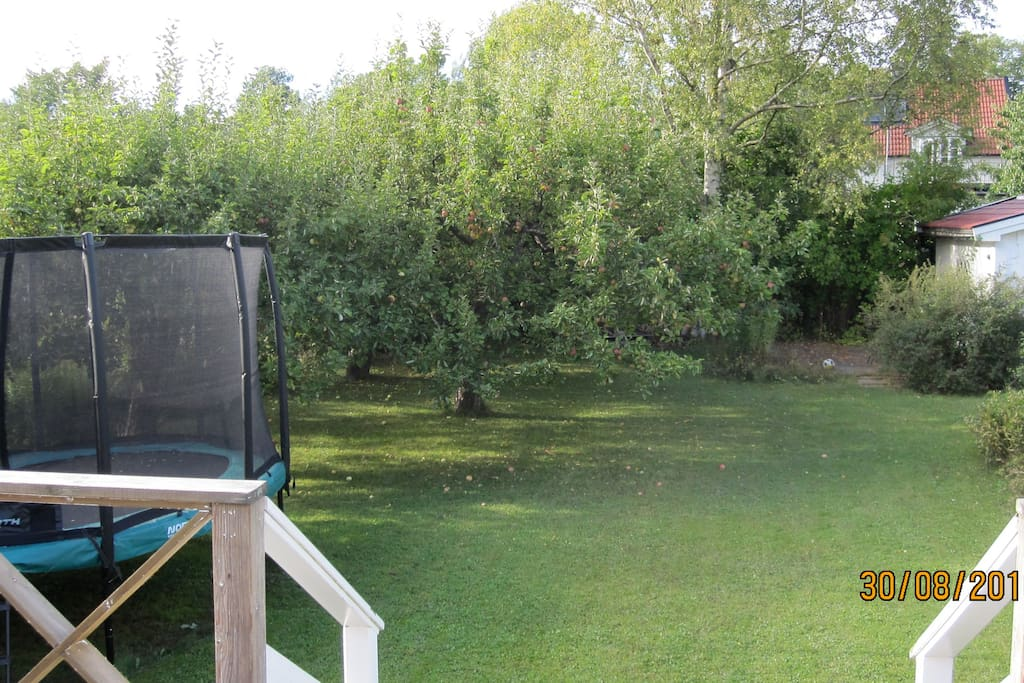 The property with a trampoline