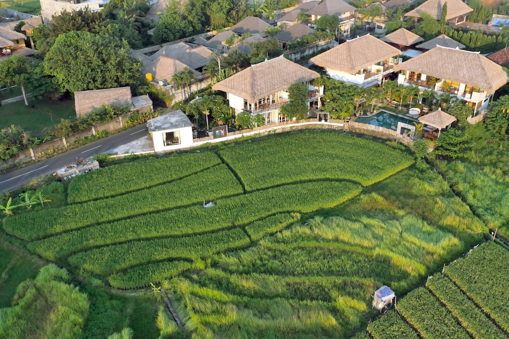 view from all my compound with the rice fields in front