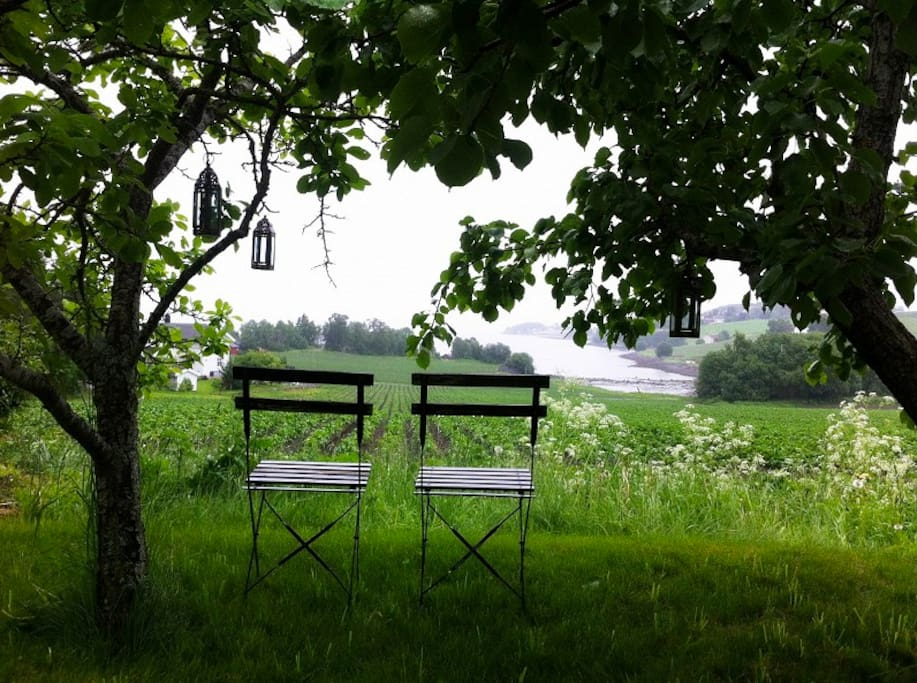A nice view of the fjord under the pear trees