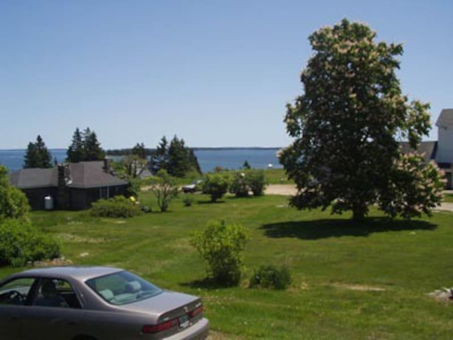 View of Blue Hill Bay and our Chestnut tree.