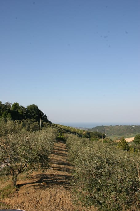 View to the Adriatic Sea (olive grove included!)