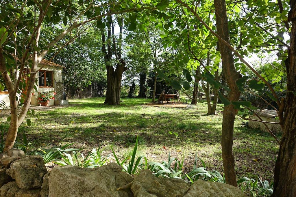 Jardin situé en face de la cour mitoyenne (autre photo)