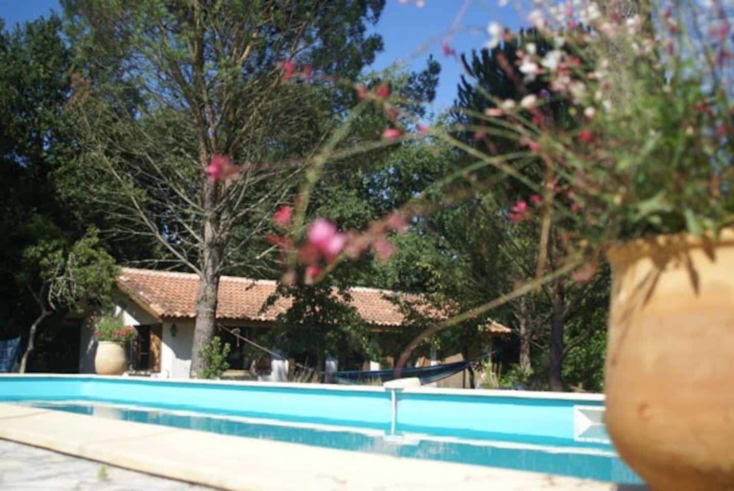 Une belle piscine de 12x4, sous un pin Parasol.