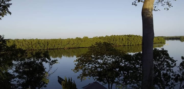 Bird Watching Paradise Mangrove Lodge
