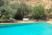 Our Infinity Pool is surrounded by Almond, Olive, Orange, Lemon, Fig and Pomegranate  trees