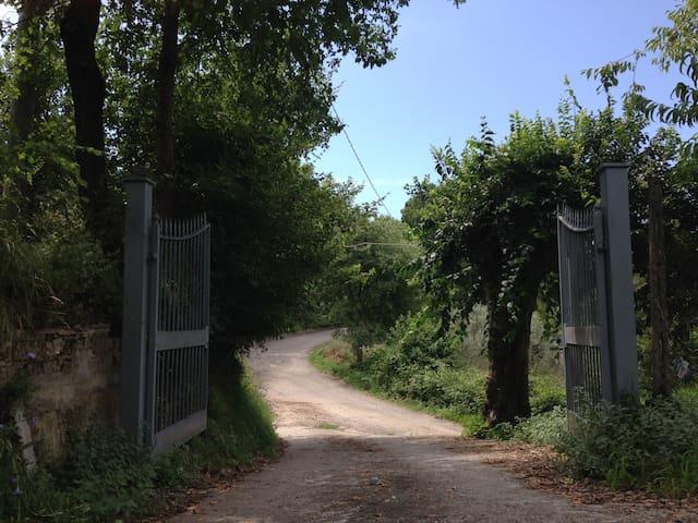Casa Olivio