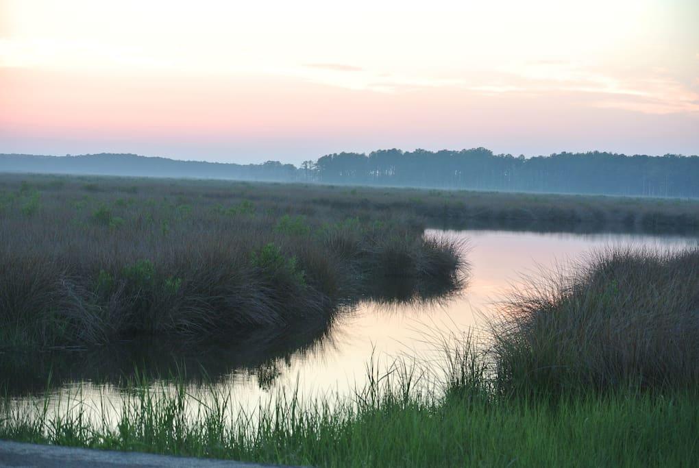 Marshland view near Blackwater National Wildlife Refuge.