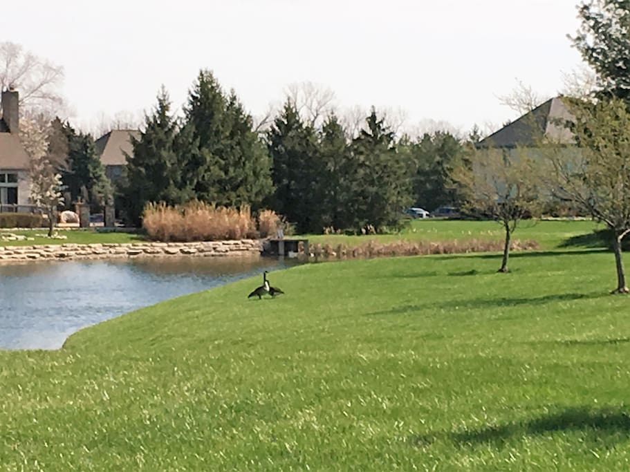 View from front porch of fishing pond across the street.