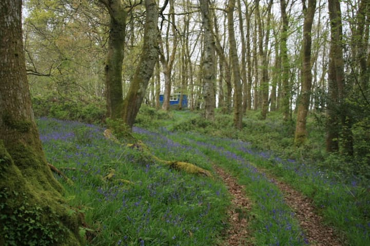 Beautiful Bluebell Wagon & Hot tub - Carmarthenshire - Chatka