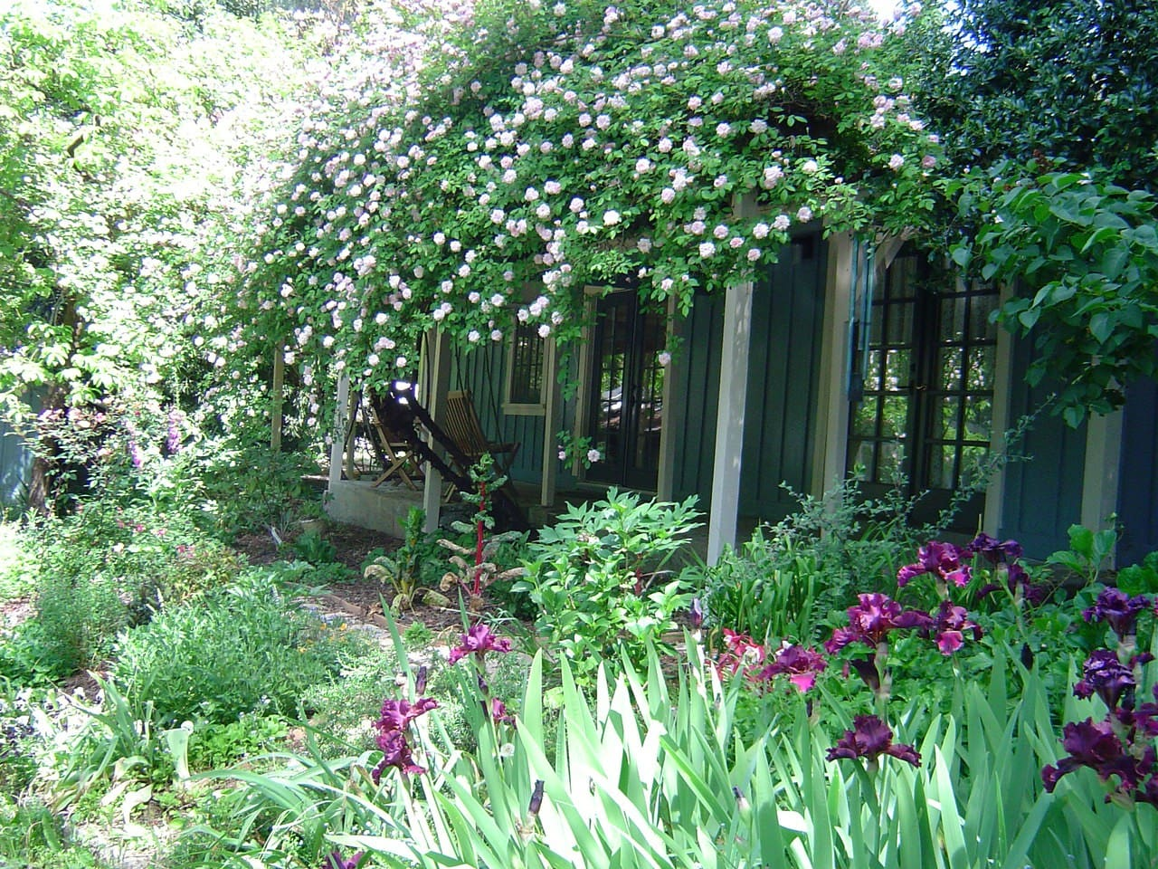 The Rose Cottage is really a rose covered Cottage in April as the two massive Cecil Bruner roses flower.