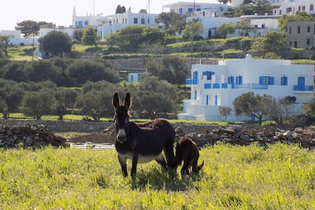 Captain's Home_Sifnos_Artemonas - Artemonas - Villa