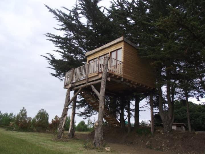 Cabane dans les arbres face à la mer