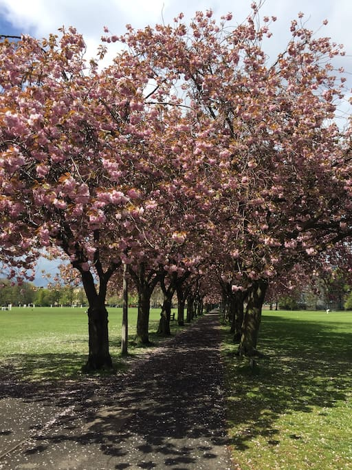 Spring blossom in the nearby Meadows.