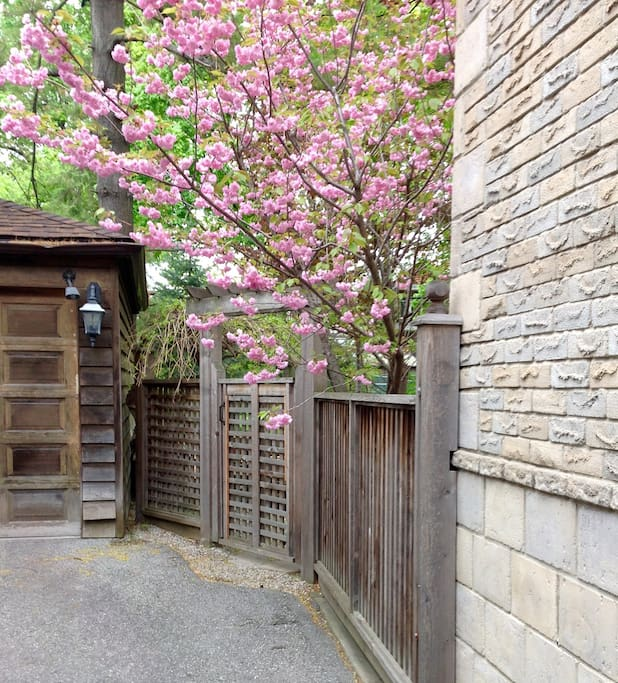 Spring blossoms side gate  and entrance.