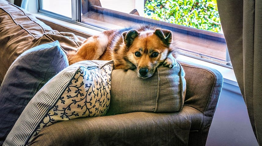 Well behaved pets love Werona.  Aashka knows she should be on one of our provided pet blankets if she's going to be on the couch!