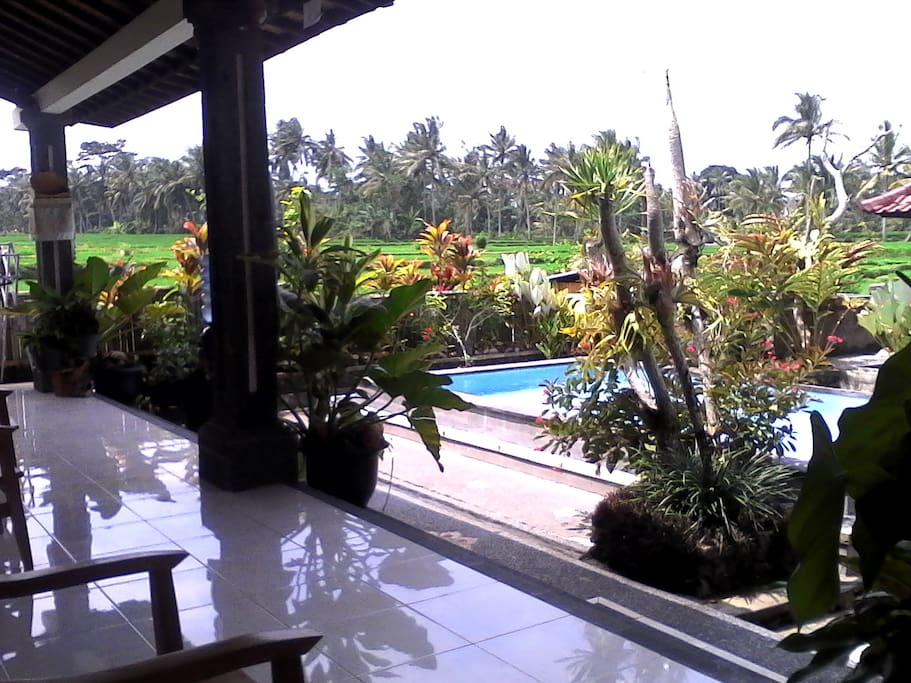 Rice field view and beautiful surrounding garden
