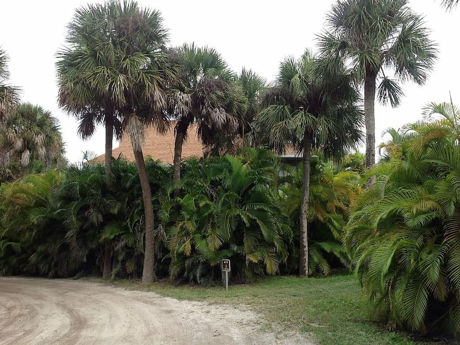 Manatee  Harbor Hideaway is surrounded by Areca plants