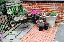 Summer Flowers in Courtyard