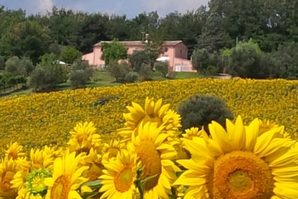 Villa Sant'Elena: surrounded by nature, the villa is just 500 meters from the center of the medieval village of Morro d'Alba