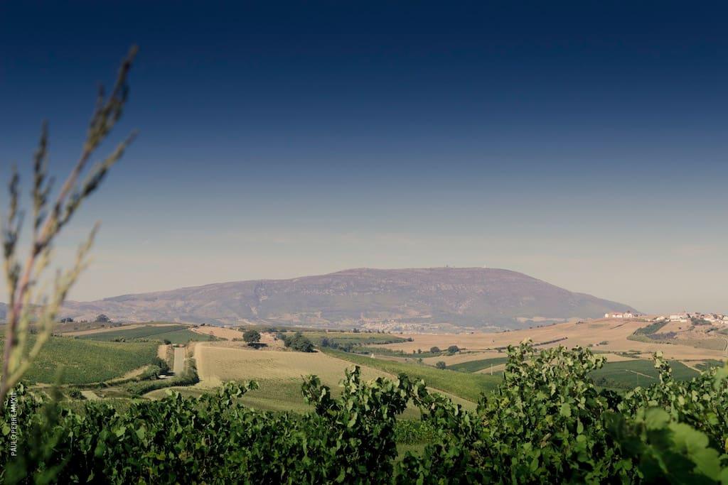 Palhacana Vineyards views