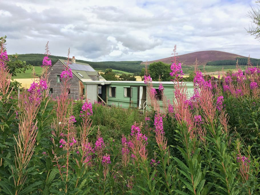 The cozy caravan is next to our straw-bale eco-home