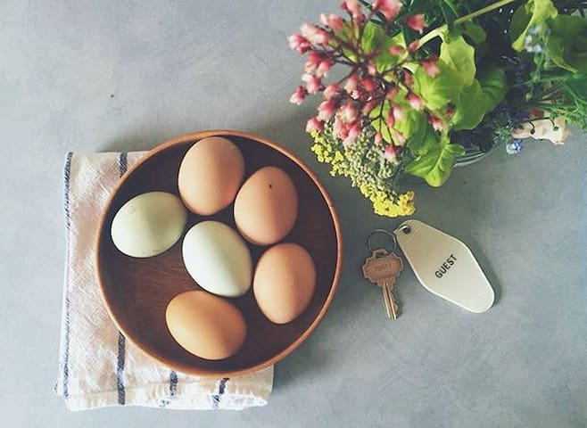 Grab some eggs from the chicken coop!