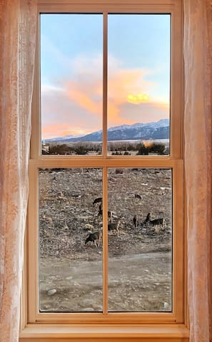 The view of the mountains and wildlife from bed in the  master is a real treat!