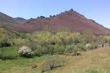 El monte esta de color morado de la floración del brezo